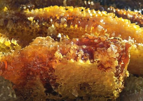 Đặc sản này có giá khoảng 120 - 160 USD một kilogram trên thị trường chợ đen, và chỉ có thể lấy từ ong rừng. Ảnh:Interesting Engineering.