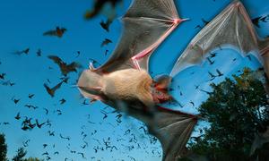 10 hành trình khám phá động vật hoang dã