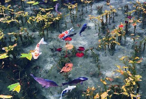 Nhiều người cho biết khi nhìn bức ảnh chụp hồ Monet, họ vẫn nghĩ mình đang xem một bức tranh vẽ, hoặc bánh thạch rau câu. Ảnh: Sora News.