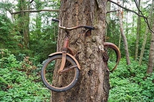 Chiếc xe nằm trọn trong thân cây linh sam, chỉ để lộ phần bánh xe và tay lái. Ảnh: Vintage News.