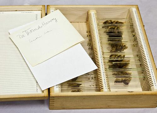 Những lát cắt của một trong những bộ óc vĩ đại nhất thế giới được trưng bày trong hộp gỗ. Ảnh: Bảo tàng Mutter.