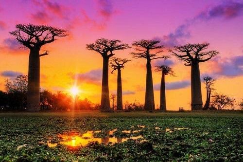 Cây Baobab được coi là biểu tượng quốc gia. Ảnh: Travel Triangle.