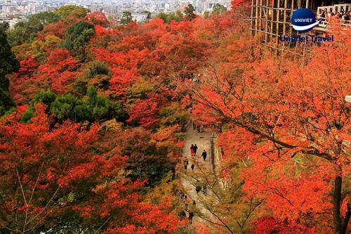 Phong cảnh mùa lá đỏ tại chùa Thanh Thủy (Kyomizudera) - Kyoto Nhật Bản.