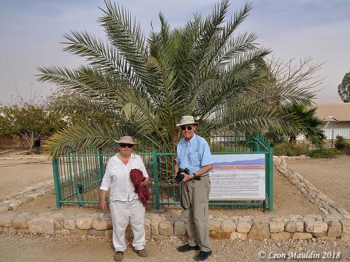 Du khách tham quan cây chà là cổ vào năm 2018. Ảnh: Leon Mauldin.