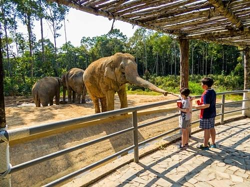 Trẻ em cho voi ăn ở Phú Quốc. Ảnh: Shutterstock/Diego Fiore.