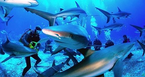Du khách tránh đeo trang sức sáng bóng khi lặn,khiến cá mập lầm tưởng là các loài cá có vảy hoặc dùng mồi nhử để các con vật tới gần mình, luôn giữ khoảng cách với chúng. Ảnh: Escaping Elegance.
