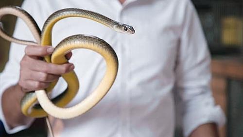 Làng rắn Lệ Mật là nơi dành cho những du khách muốn thử cảm giác mới mẻ khi du lịch Việt Nam. Dù vậy, tiêu thụ rắn vẫn là vấn đề gây tranh cãi khi các tổ chức bảo vệ động vật cho rằng đây là hành động vô nhân đạo.  Ảnh: Diana Diroy.