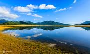 Thảo nguyên vàng giữa lòng hồ Núi Một