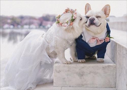 Edward Mady, quản lý khách sạn The Beverly Hills từng được yêu cầu tổ chức đám cưới cho chó cưng của khách. Đám cưới này tốn 15.000 USD. Edward xoay sở để tìm một linh mục, cũng như một nhà cung ứng thức ăn cho chó. Tuy nhiên, thử thách lớn nhất là nhân viên khách sạn chỉ được phép giao tiếp thú cưng của khách bằng ngôn ngữ của chó. Ảnh: Paper Cards.