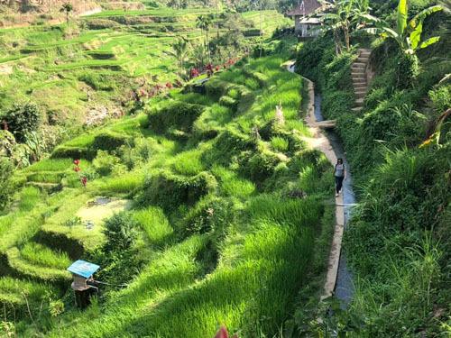 Ruộng bậc thang ở làng Kintamani.