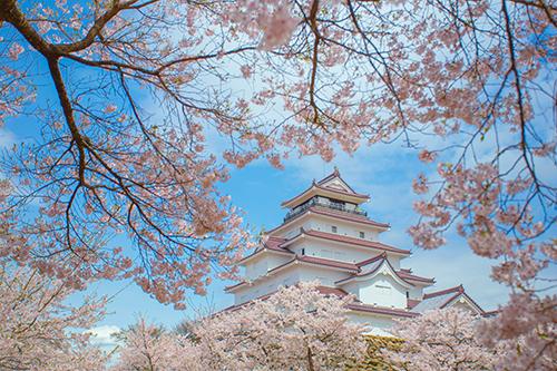 Du khách có thể tham khảo tour ngắm hoa anh đào Nhật Bản khi đến ngày hội. Ảnh: Shutterstock.