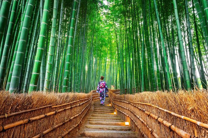 Rừng tre Arashiyama Lạc vào xứ sở thần tiên. Ảnh: Shutterstock.