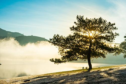 Đồi cỏ hồng khu vực cây thông cô đơn ven hồ Suối Vàng tuy hơi khó vào  nhưng có quang cảnh hoang sơ, vắng người thuận lợi để chụp ảnh. Ảnh: Van Nguyen Ngo.