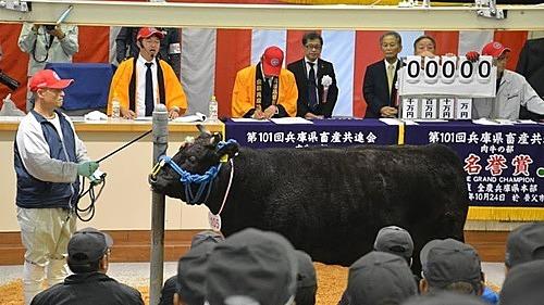 Buổi đấu giá thịtbò Kobe truyền thống làn thứ 101 là nơi duy nhất có thể mua được thịt bò Kobe chính thống tại Nhật Bản. Ảnh: Chris Dwyer/CNN