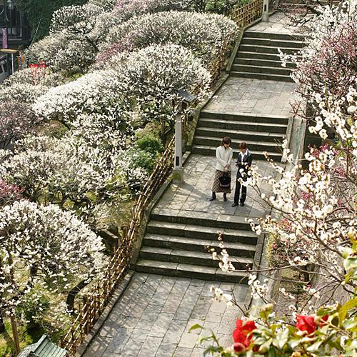 Hoa mơ nở kín lối vào ngôi đền. Ảnh: Japan Highlight Travel.