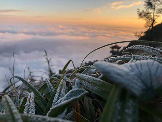 Lớp băng tuyết phủ trên các ngọn cây trong khu du lịch Fansipan Legend. Ảnh: Nguyễn Xuân Chiến.