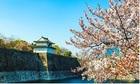 TST tourist giảm giá tour du xuân 2020