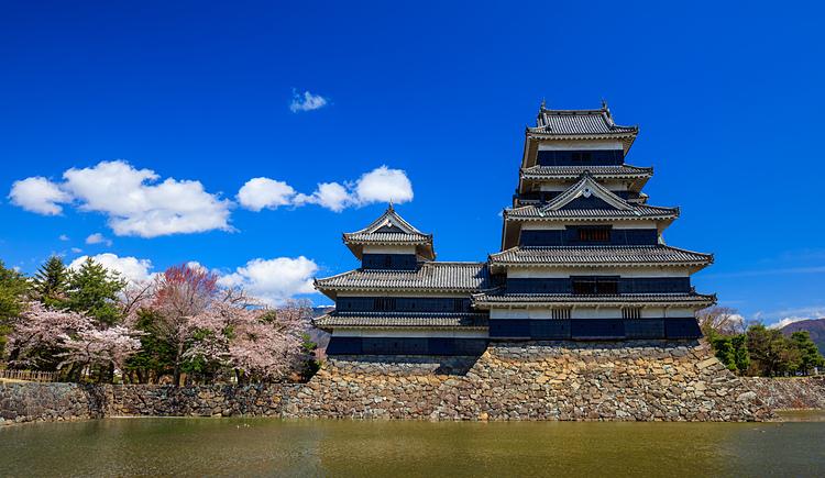 Hoa anh đào tại lâu đài Matsumoto. Ảnh: Envato.