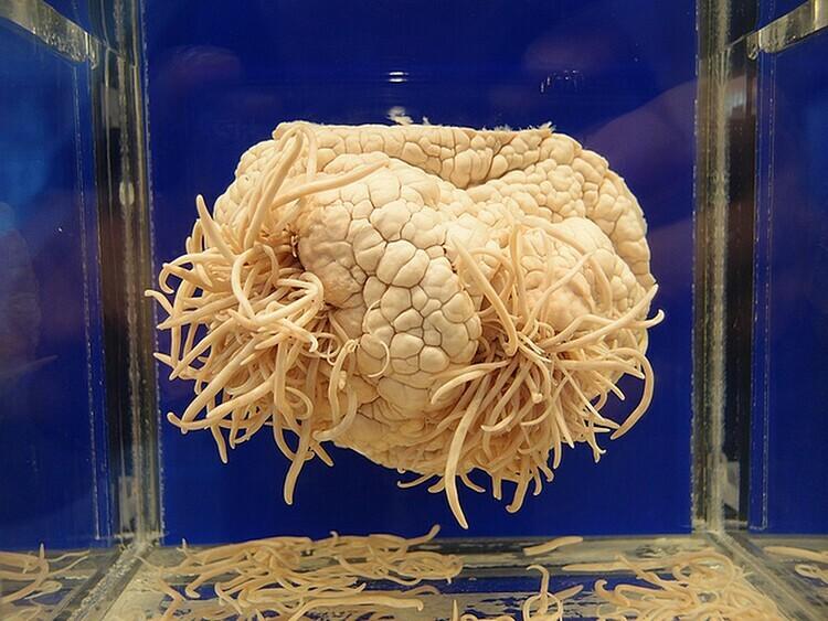 Hàng trăm mẫu vật ký sinh trùng được trưng bày trong bảo tàng. Ảnh: Guilhem Vellut/Flickr.