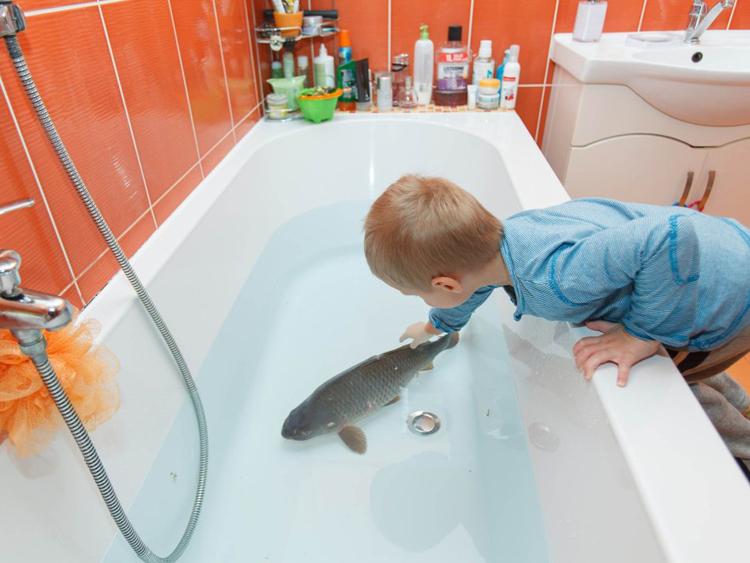 Nhiều trẻ em thậm chí còn đặt tên cho con cá chép mà bố mẹ mua về thả trong bồn tắm. Ảnh: Kafkadesk.