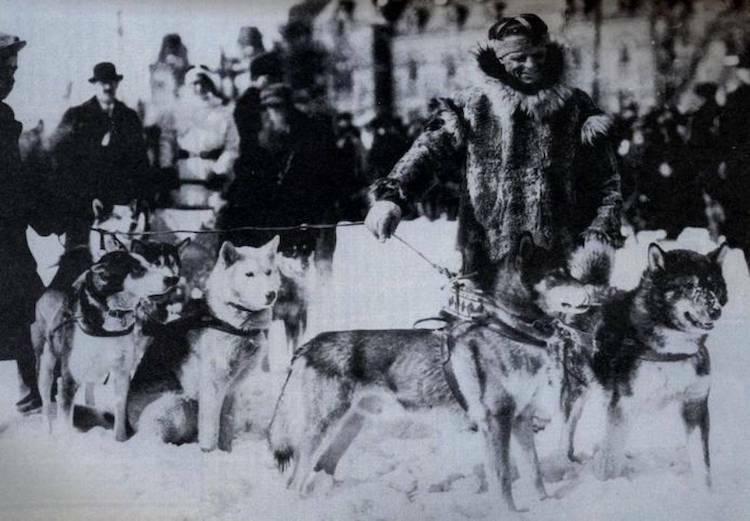 Đoàn chó kéo trong cuộc chạy đua đưa huyết thanh đến Nome năm 1925. Ảnh:Forgotten History.