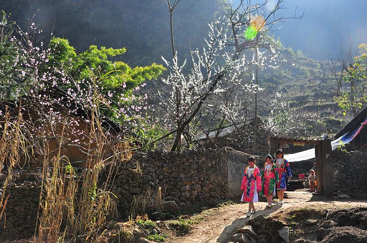 Hoa mận, hoa đào nở ở xã Thài Phìn Tủng, trên đường qua đèo Mã Pí Lèng. Ảnh: Xu Kiên.
