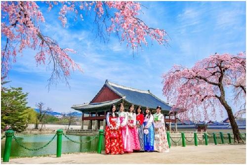 Du khách đến Hàn Quốc du xuân.
