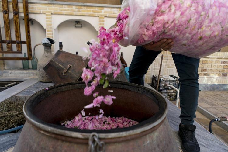 Người dân Ba Tư có truyền thống chưng cất nước hoa hồng để làm nước hoa và cánh hoa cũng được dùng trong các món ăn, thảo dược. Ảnh: Atlasobscura.