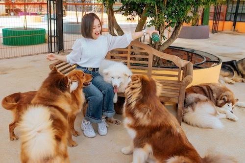 Puppy Farm Đà Lạt là điểm hẹn lý tưởng cho hội say mê thú cưng. Ghé thăm nơi đây, bạn có cơ hội vui chơi cùng các chú cún cưng.