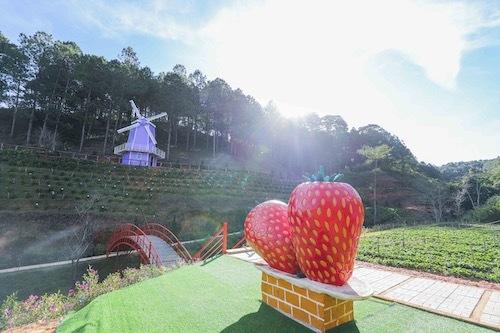 Những tiểu cảnh này mang đến nét đẹp riêng khác cho không gian của Thiên Đường Tím. Đồng thời, khách du lịch ghé thăm Thiên Đường Tím còn có cơ hội tham quan, trải nghiệm hoạt động hái dâu tại vườn.
