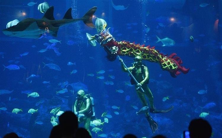 Màn trình diễn được thực hiện bởi các thợ lặn chuyên nghiệp. Ảnh: News CN.