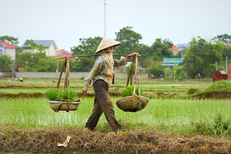 Quang gánh là vật dụng tiện dụng củangười lao động tạiViệt Nam và một số quốc gia châu Á.Ảnh:Fiveprime.