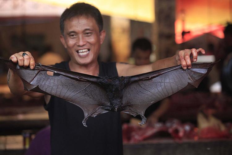 Thịt dơi được bày bán trong chợ truyền thống Tomohon, Norht Sulawesi. Ảnh: Dhoni Setiawan/Jakarta Post.