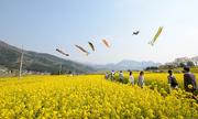 Những mùa hoa đẹp ở Nagano và Niigata
