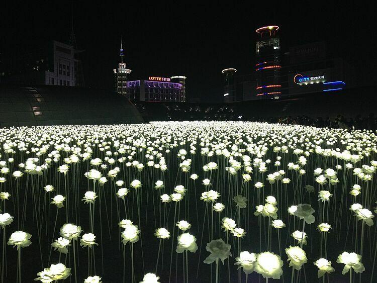 Khu vườn ánh sáng Dongdaemun DesignĐêm xuống, khi đi bộ từ lối ra số 1 của Trạm Công viên Lịch sử và Văn hóa Dongdaemun, bạn sẽ đến khu vực Đồi Cỏ của DDP. Ở đây có hơn 20.000 bông hoa hồng bằng đèn LED, được thắp sáng rực rỡ. Đây là một trong những địa điểm chụp ảnh sống ảo nổi tiếng tại Seoul. Những bông hoa hồng sẽ được thắp sáng từ lúc mặt trời mọc đến 22 giờ đêm. Những khi trời mưa, tuyết, khu vườn sẽ không thắp đèn.