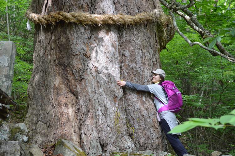 Người dân thực hành tắm rừng bằng cách ôm cây hạt dẻ 800 năm tuổi trên ngọn núi Shichimen, Hayakawa. Ảnh: Close to Mount Fuji.