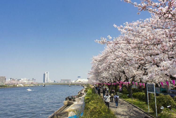 Công viên SumidaKhu vực trải dài từ cầu Azumabashi đến cầu Sakurabashi sông Sumida là điểm ngắm hoa anh đào nổi tiếng, tồn tại nhiều thế kỷ. Hơn 1.000 cây anh đào được trồng dọc bờ sông tạo nên một khung cảnh tuyệt đẹpcho những buổi dã ngoại. Từ nơi này bạn có thể thấy tháp truyền hình Tokyo Skytree. Ngoài ra, nếu cảm thấy đông đúc mệt mỏi, bạn có thể đi thuyền yakatabune trên sông và tận hưởng không khí trong lành với xung quanh là rừng đào. Ảnh: Go Tokyo.