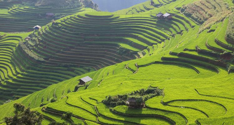 Trang tin miêu tả Mù Căng Chải hiện ra như một ngôi làng trên núi đầy màu sắc, bao quanh bởi những đồng ruộng bậc thang cao chót vót. Ảnh:Frans Sellies.