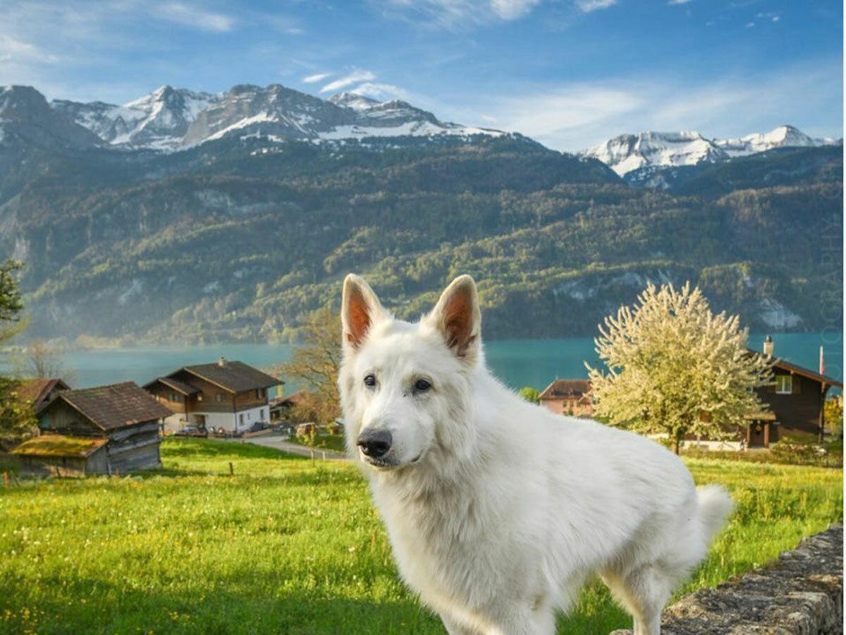 Rasta có sở thích ăn tuyết, lăn lộn với hoa lá và bơi trong hồ.