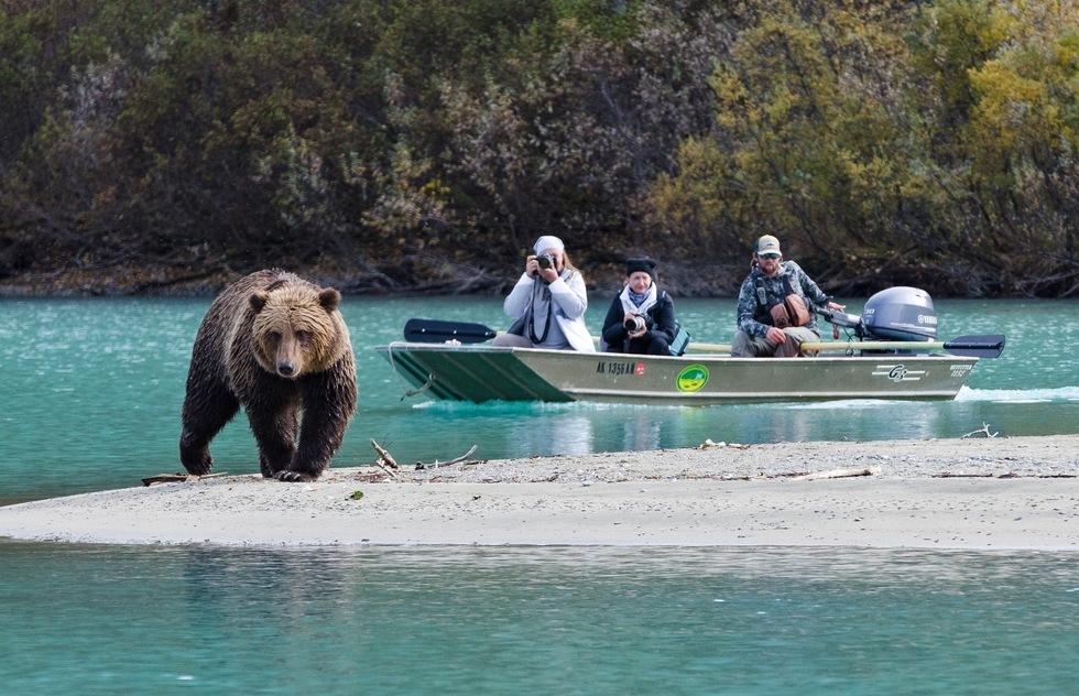 Ngắm gấu là trải nghiệm được nhiều du khách yêu thích vào mùa hè ở Alaska, nơi có thiên nhiên hoang dã trù phú. Ảnh:Juno Kim/Visit Anchorage.