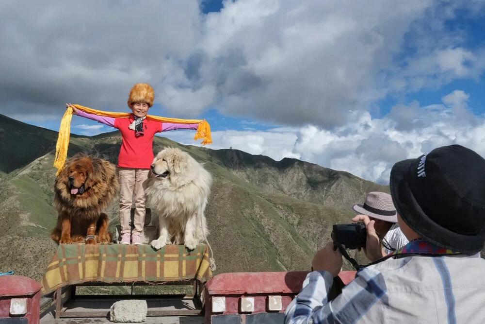 Du khách chụp ảnh cùng chó Ngao Tây Tạng. Ảnh: Asia Nikkei.