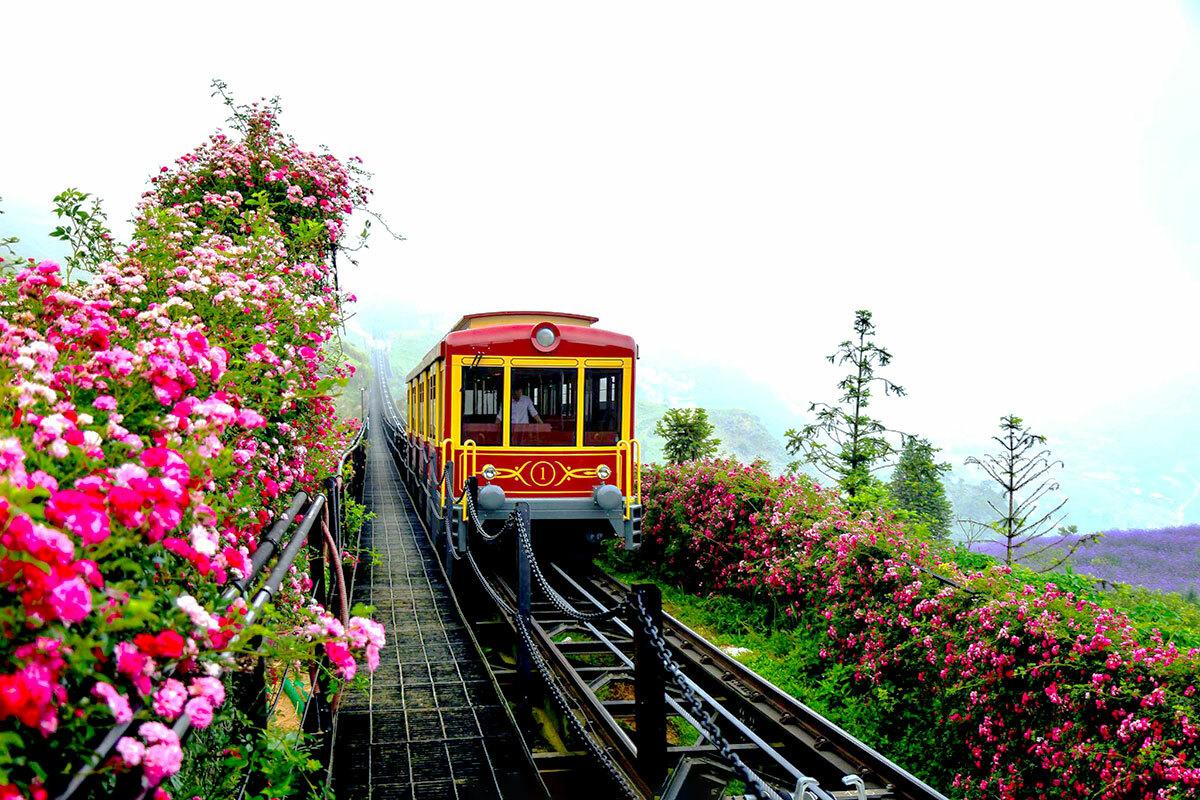 Điểm nhấn của thung lũng hoa hồng phải kể đến những thảm hồng leo. Hồng leo đỏ thường ra hoa một lần duy nhất mỗi năm vào khoảng tháng 4 và tháng 5, thu hút rất đông du khách. Thung lũng hoa hồng lớn nhất Việt Namlàkỷ lục thứ 4 khu du lịchSun World Fansipan Legend xác lập, sau kỷ lục Màn nhảy sạp có số lượng người tham gia lớn nhất từ trước tới nay, Show diễn nghệ thuật thể hiện đặc trưng văn hóa Tây Bắc độc đáo nhất Việt Namdành cho Vũ điệu trên mây vàkỷ lục Tàu hỏa leo núi dài nhất Việt Nam cho công trình Tàu hỏa leo núi Mường Hoa.