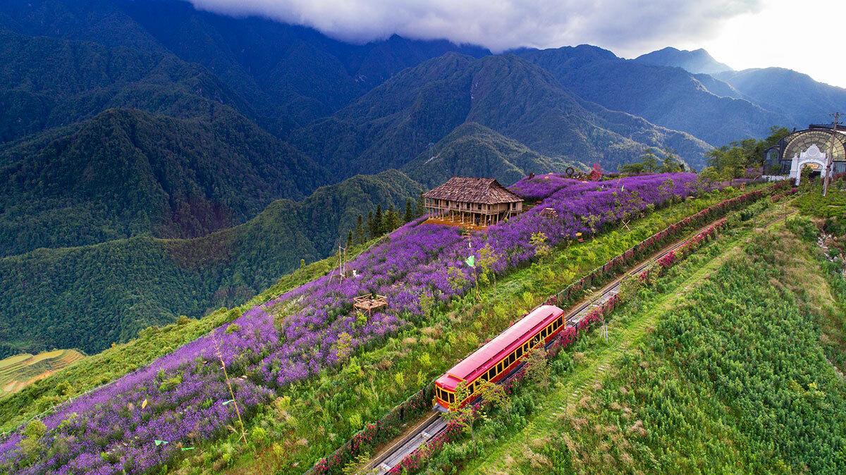 Ngay bên cạnh thung lũng hoa hồng là cánh đồng hoa tím bạt ngàn, nơi du khách có thể thỏa thích chụp hình, tham quan miễn phí. Cánh đồng hoa mã tiên thảo này nở rộ đẹp nhất từ tháng 5 đến tháng 7.
