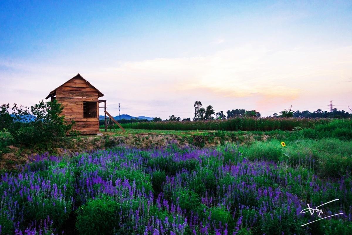 Green life farm tọa lạc tại số24 Lý Thần Tông (làng An Lưu), phường Hương An, Hương Trà, cách thành phố Huế khoảng 5 km. Nơi đây thu hút du khách với nhiều loại hoa.