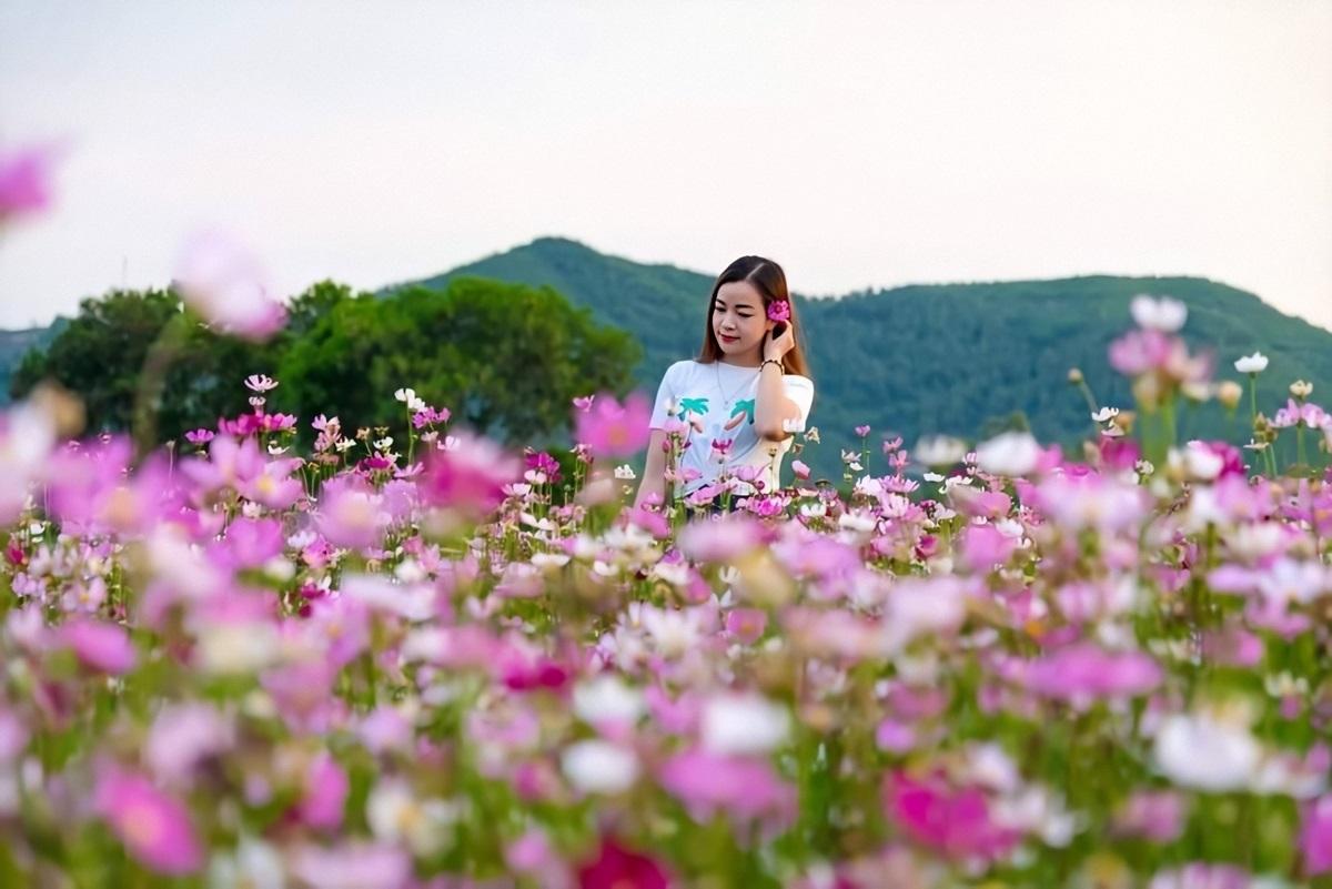 Anh Sáng cho biết chọn kỹ giống hoa vànói không với thuốc bảo vệ thực vật.