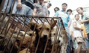Người Trung Quốc mở hội thịt chó bất chấp Covid-19