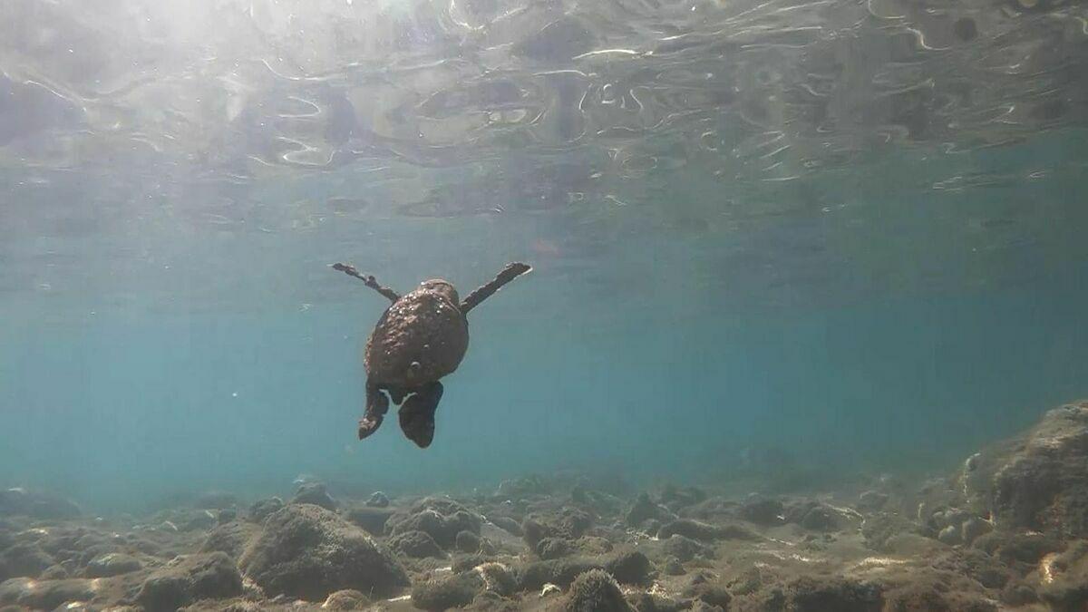 Tại Koh Samui, người địa phương nhận ra nước biển trong xanh hơn khi những du thuyền, cano dừng hoạt động vì đại dịch. Đó cũng là lý do rùa trở lại với bờ biển. Ảnh: Sky News.