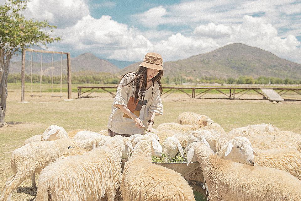 Lần đầu tiên 9X được trải nghiệm là người nuôi cừu đích thực. Thương cho cừu ăn, vui chơi trên đồng cỏ, tìm hiểu cách nuôi cừu, thu hoạch lông cừu của người dân địa phương và chụp nhiều bức ảnh lưu niệm.