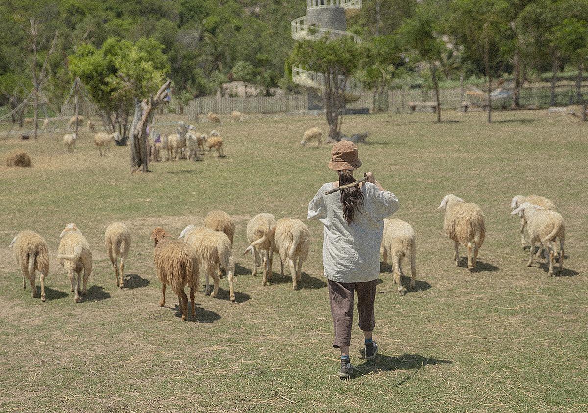 Từ sân bay Cam Ranh, Hoài Thương thuê xe máy đến tham quan cánh đồng cừu suối Tiên, Ninh Thuận theo lời giới thiệu của người dân địa phương.