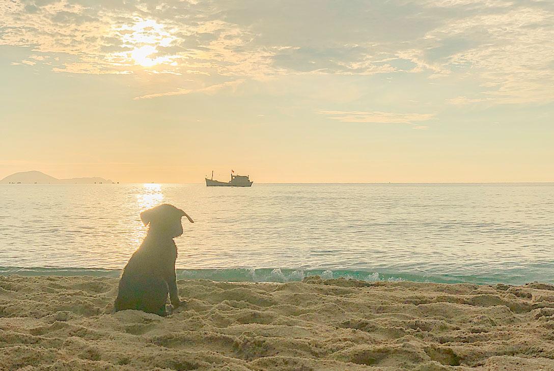 Sáng sớm, Thương ra bờ biển ngắm bình minh. Mặt trời đỏ sậm dần rồi chuyển thành vàng tươi hiện lên dưới làn nước mênh mông tạo nên bức tranh thiên nhiên kỳ vĩ, Thương miêu tả.